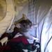 Small photo of Orla