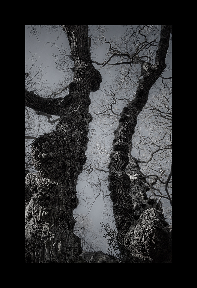 Photography: Two Branches by Nicholas M Vivian