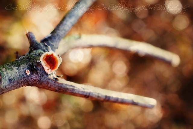 trying to catch some bokeh with a stick & a bug on a mushroom