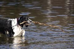 Sognsvann - A dog