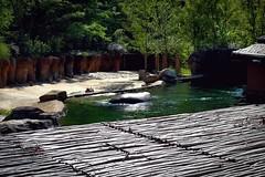 ZAMBEZI RIVER HIPPO CAMP