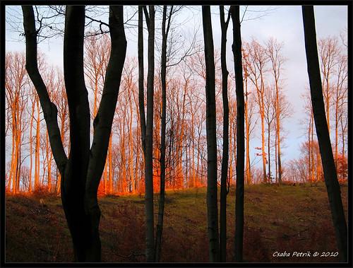 winter sunset red mountain tree rock contrast race canon landscape geotagged hungary hiking hill powershot climbing gps g3 survival touring zemplén túra téli hamahama túlélő csabx daypacking túlélőverseny tüdőtisztitó