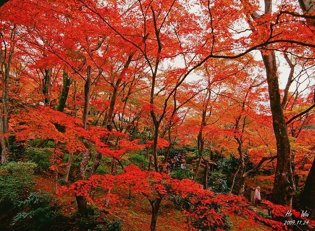 1124_kyoto_1029F