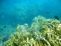 sports(0.0), diving(0.0), shoal(0.0), coral reef(1.0), coral(1.0), coral reef fish(1.0), sea(1.0), ocean(1.0), marine biology(1.0), stony coral(1.0), natural environment(1.0), underwater(1.0), reef(1.0),