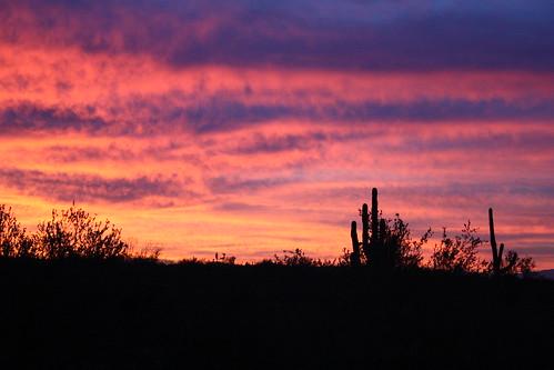 morning arizona cactus sun sunrise unitedstates desert tucson az saguaro marana