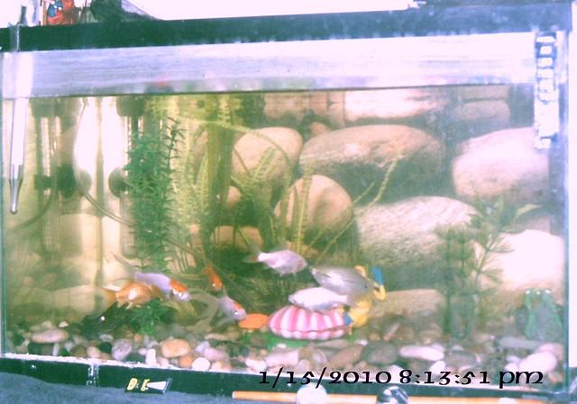 Flickr photo sharing for Dunn fish farm