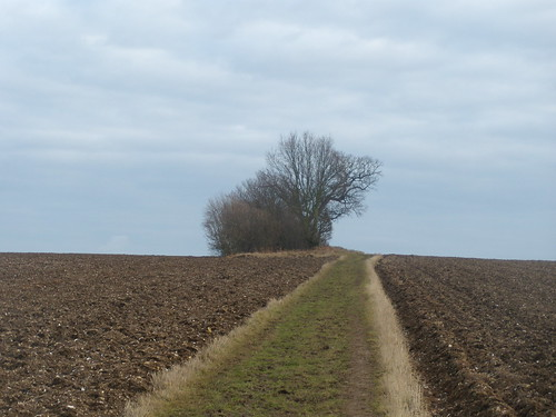 Bridleway across fields