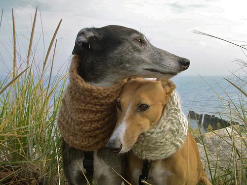 greyhound lake wool grass scarf michigan prairie evanston