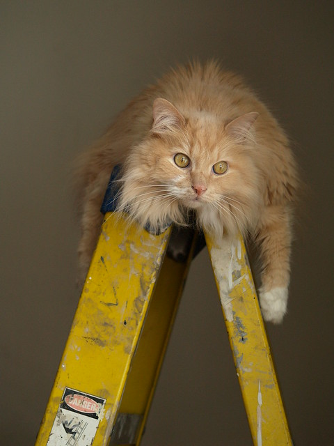 Max and the ladder