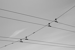 electrical supply, white, overhead power line, line, monochrome photography, electricity, monochrome, black-and-white,