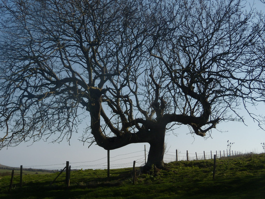 Tree Berwick to Seaford