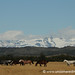 Horses Graze at Torres Del Paine National Park - Chile