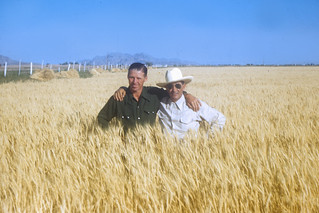 Norman Borlaug, 1961