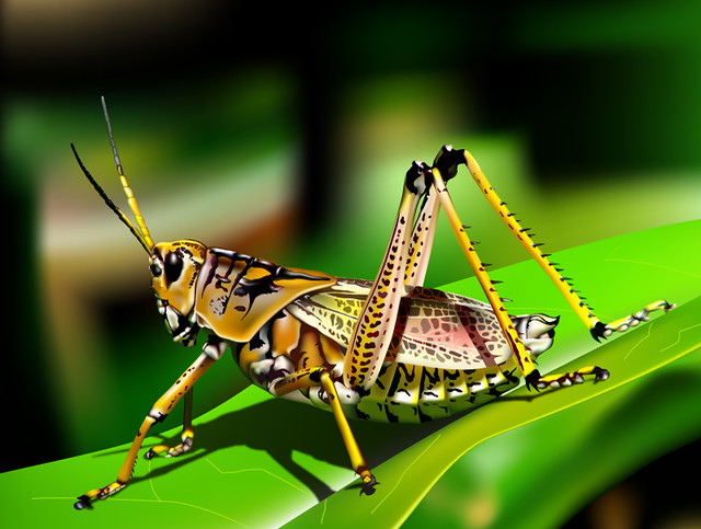 Ah, Grasshopper   Flic...