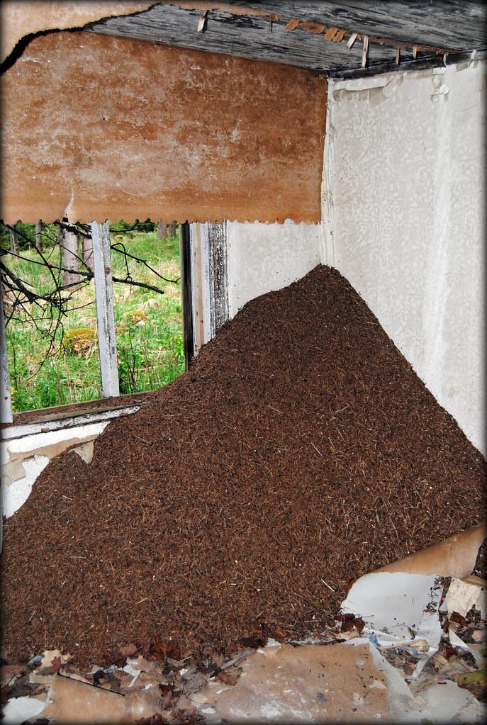 Ant-hill inside Acktjärns torp | Tom E | Flickr