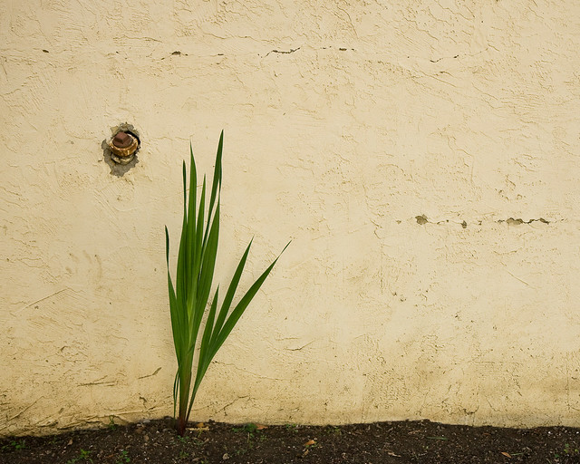 wall with plant and drain plug flickr photo sharing. Black Bedroom Furniture Sets. Home Design Ideas