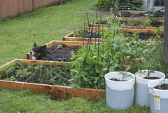 raised-bed gardens
