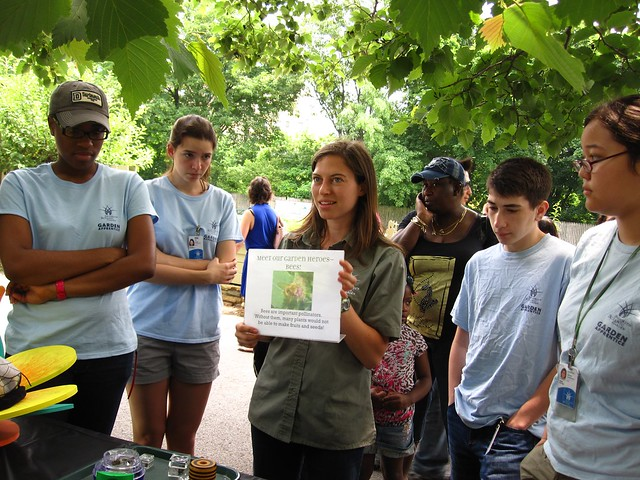 BBG's Early Education Coordinator Ashely Gamell gives a tutorial to the Garden Apprentices on bee identification. Photo by Rebecca Bullene.