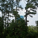 Biloxi, MIssissippi Water Tower hidden by some trees - TEDx Oil Spill