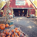pumpkins at the hollow - camillus, ny