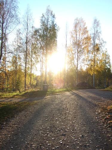 road light sun finland birch isokirja