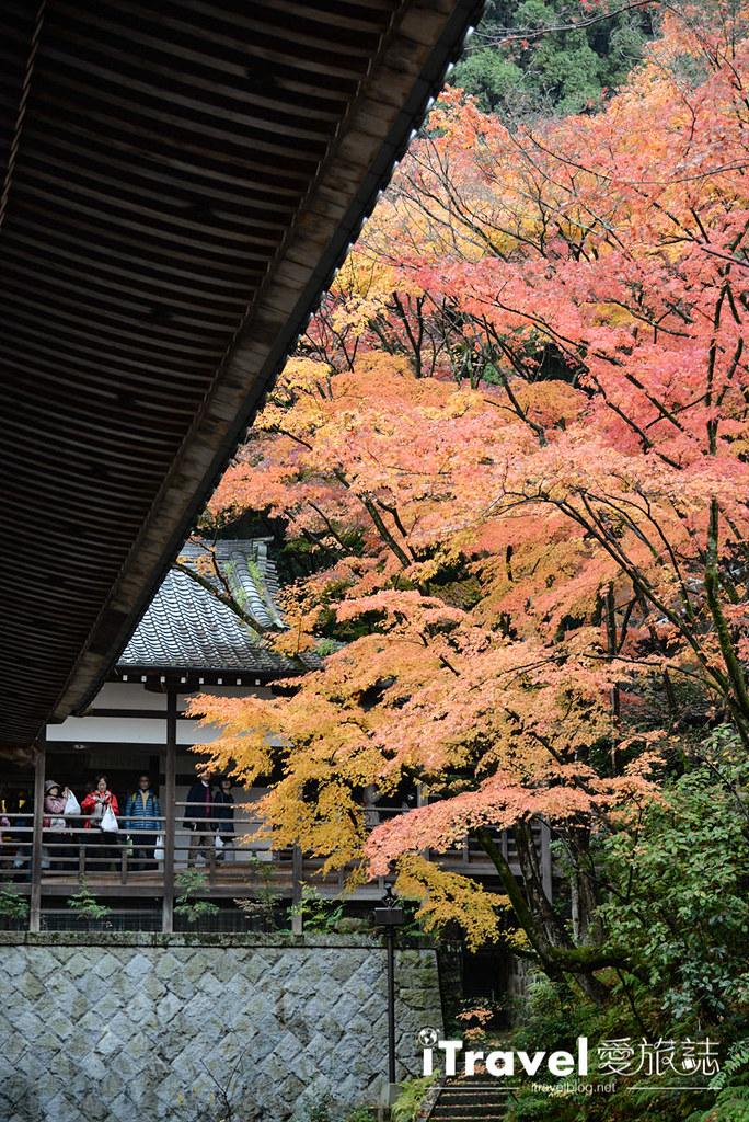 京都赏枫景点 永观堂 (30)