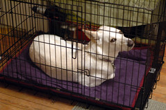 dog crate(1.0), dog(1.0), cage(1.0), pet(1.0),