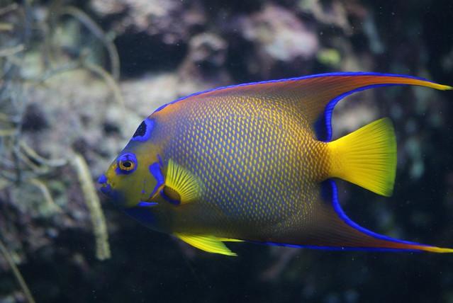 Anfibios todos los animales for Lista de peces tropicales para acuarios