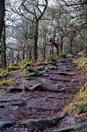 Path @ Longshaw Estate, Derbyshire