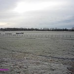 White Racecourse 01