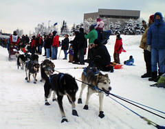 dog, winter sport, winter, vehicle, snow, mushing, dog sled, sled dog racing, sled,
