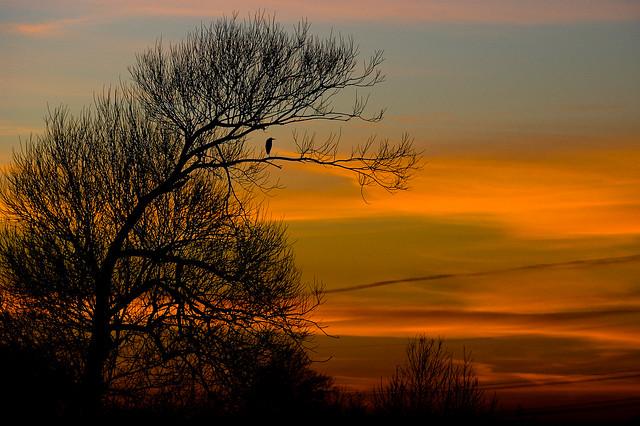 Freue mich auf ein schönes Morgen   Flickr - Photo Sharing!