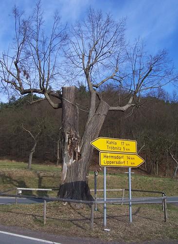 Alte Linde beim Steinkreuz Erdmannsdorf