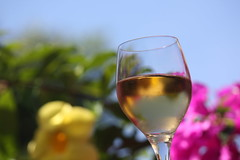 flower, wine glass, yellow, wine, stemware, glass, produce, white wine, close-up, drink, alcoholic beverage,