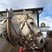 Willkommen auf dem Pferdehof Hacke