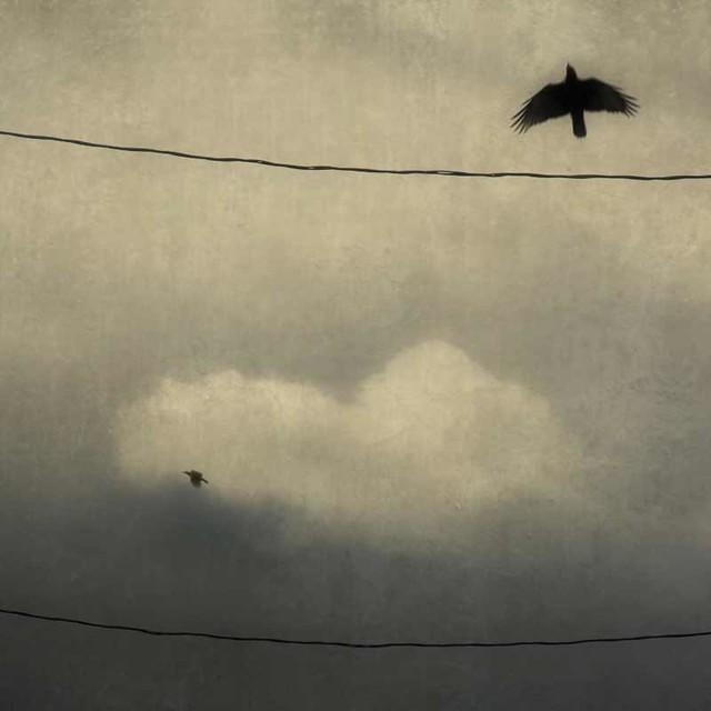 Blackbird Fly Away Blackbird Blackbird Fly Away
