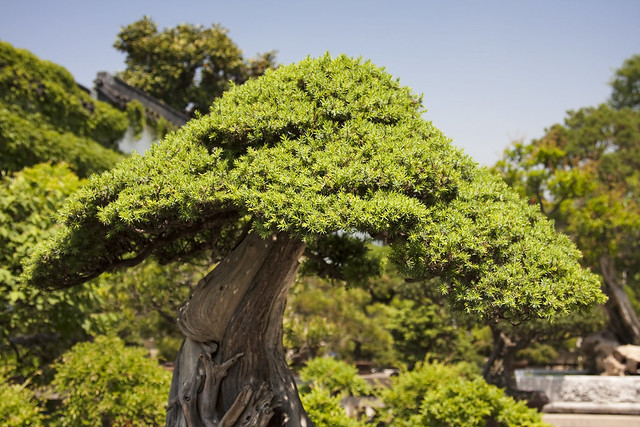 BONSAI-2 - a gallery on Flickr