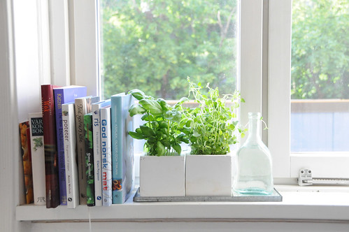 7 Herbs You Can Grow in Your Kitchen Window Box