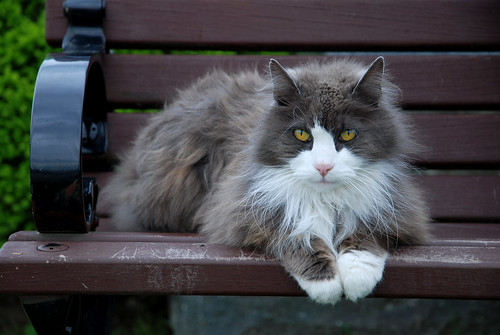 cat on a red wooden bench