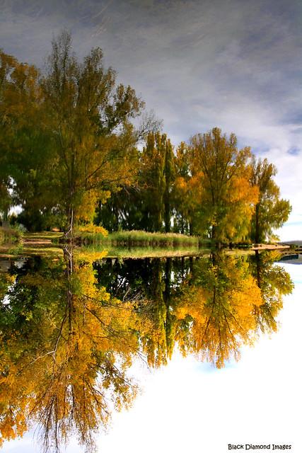 Dalgety Weir Reflections