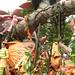 Chimelon Paradise Park
