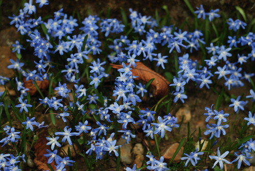DSC_0288-blue-flowers-joan-and-jess
