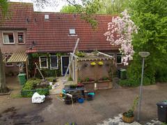 de verticale tuin van mijn buurman