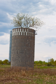 Just a silo with a tree growing out of it