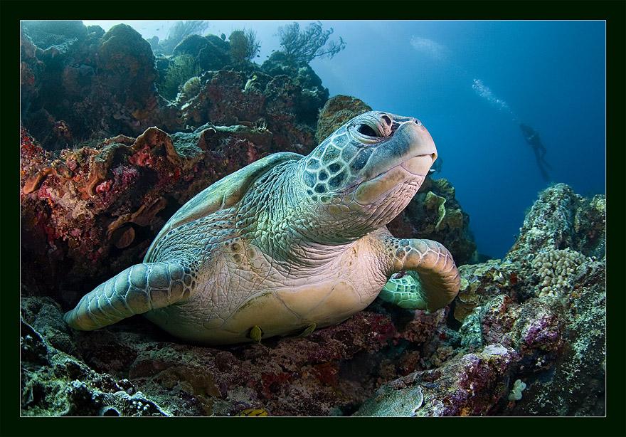 Diver, diver, I'll eat