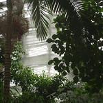 ภาพของ Forêts Tropicales Humides. paris greenhouse jardindhiver jardindesplantes serre 75005 5earrondissement 5thdistrict vearrondissement serredesforêtstropicaleshumides