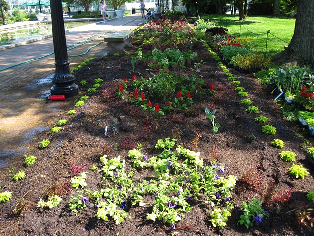 A freshly planted and nearly complete bed in the Annual Border.