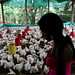 Poultry farming in Colombia