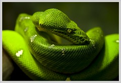 animal, serpent, western green mamba, yellow, snake, reptile, organism, macro photography, green, fauna, close-up, scaled reptile,