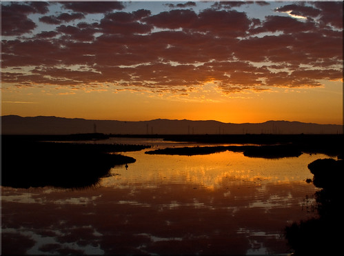birds clouds sunrise reflections dawn golden bay san francisco 100views marsh palo alto preserve baylands 7405
